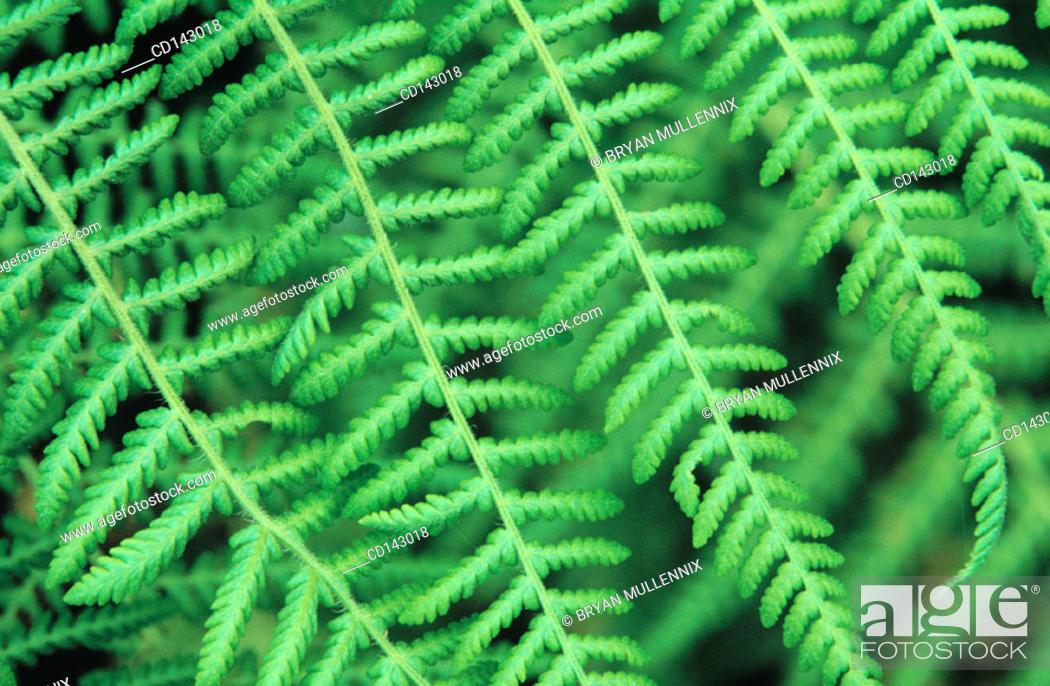 Stock Photo: Ferns.