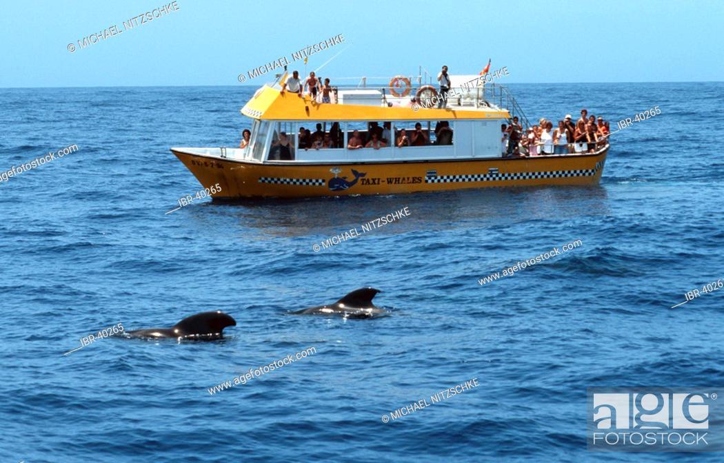 Stock Photo: Whales by Teneriffa.