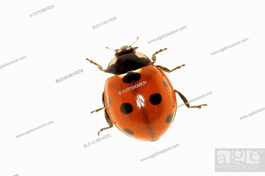 Stock Photo: Lady Bug.