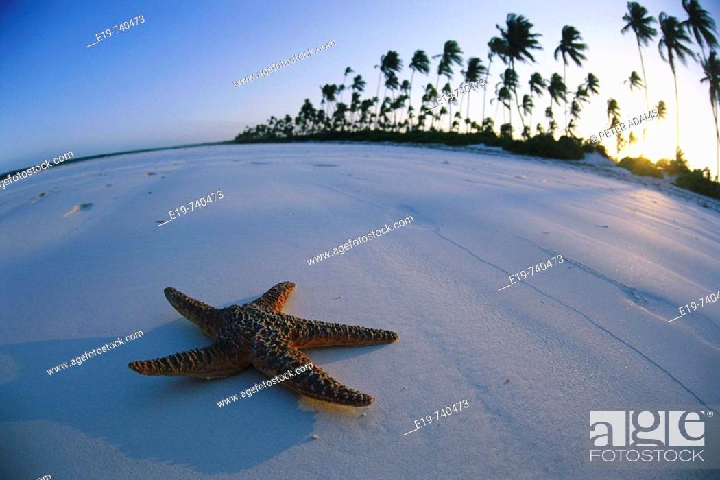 Stock Photo: Starfish on beach, Zanzibar, Tanzania.