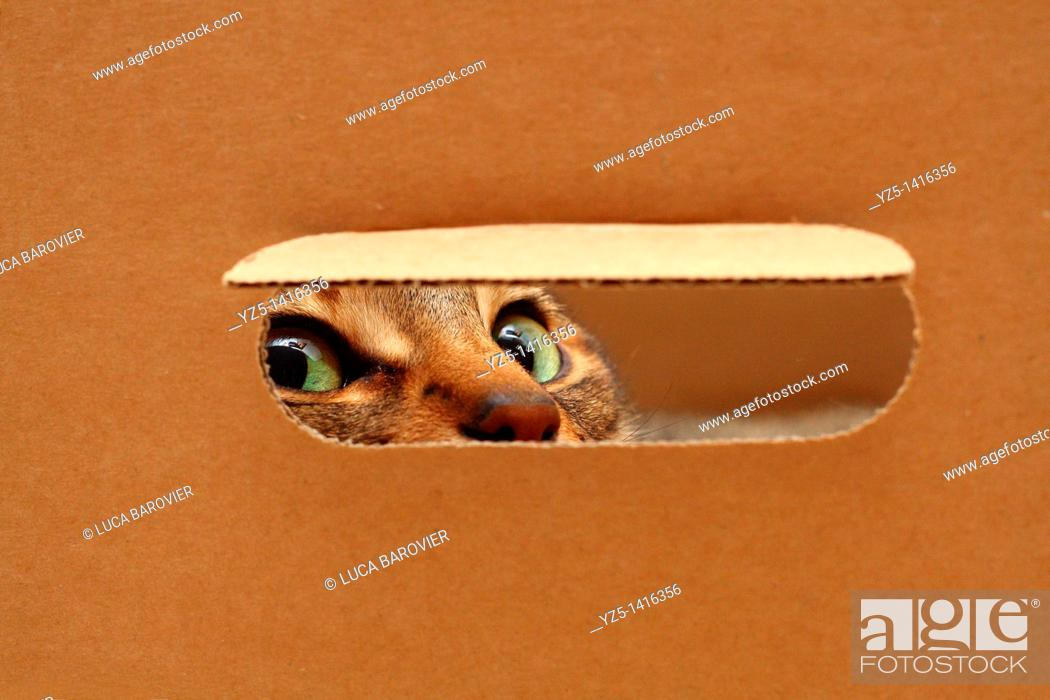 Stock Photo: Cat looking through a hole in a box.
