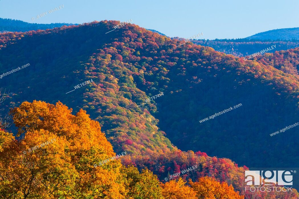 Stock Photo: Colorful Autumn Foliage in the Great Smoky Mountains National Park.