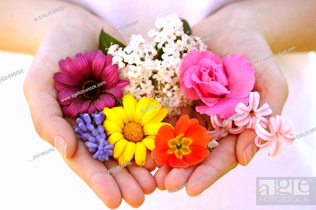 Stock Photo: Flowers on hands.