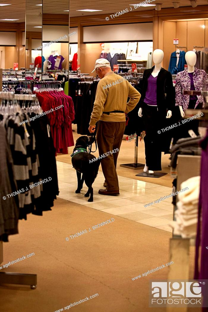 Stock Photo: Elderly man training a young service dog in a shopping mall department store.