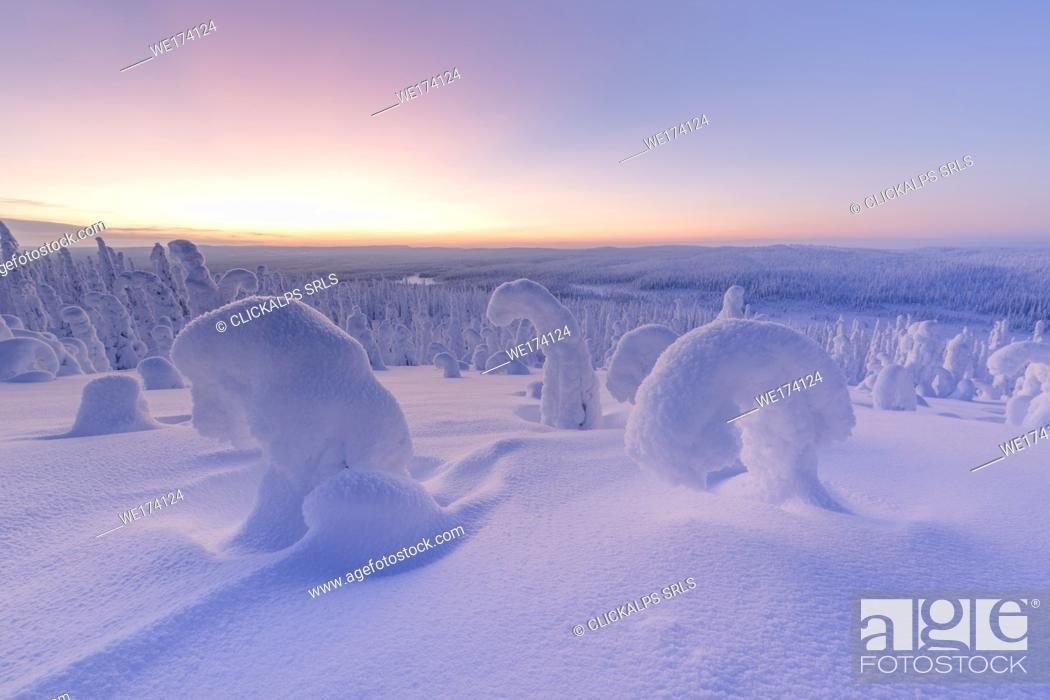 Stock Photo: Snowy forest at dawn, Riisitunturi National Park, Posio, Lapland, Finland.