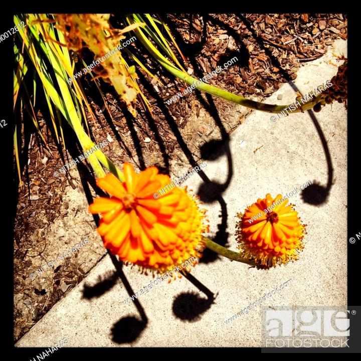 Stock Photo: Spring flowers on a sidewalk with shadows.