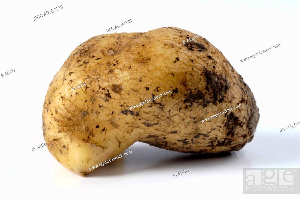 Stock Photo: Potato Solanum tuberosum indoor.