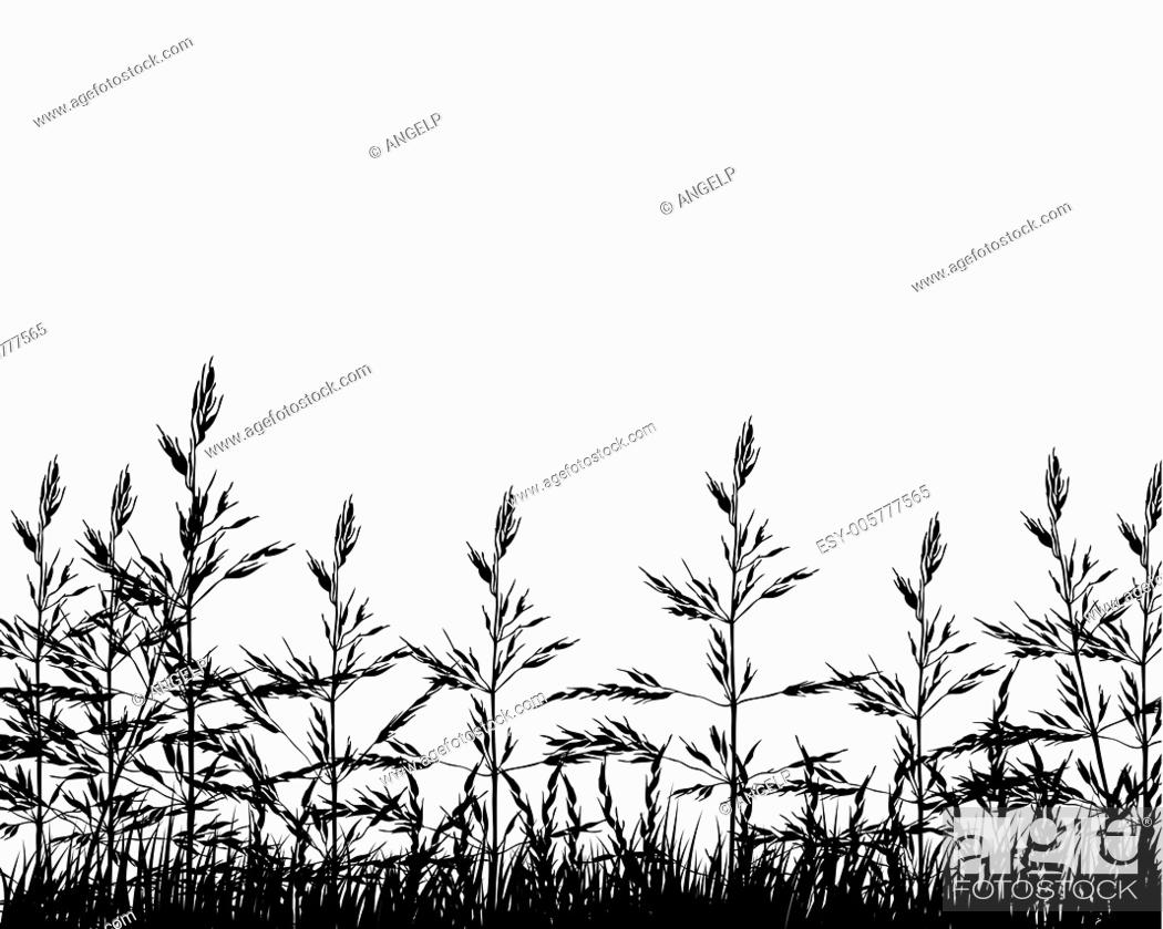 Stock Vector: meadow silhouettes.