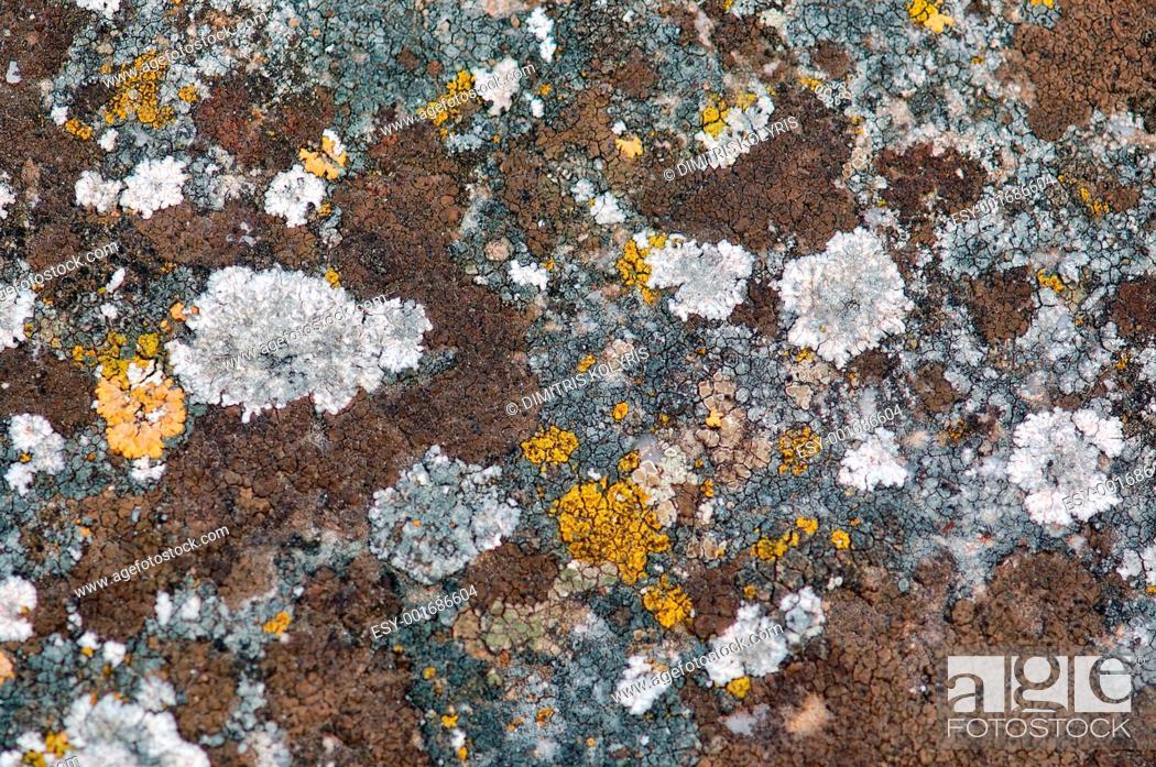 Imagen: stone fungus.