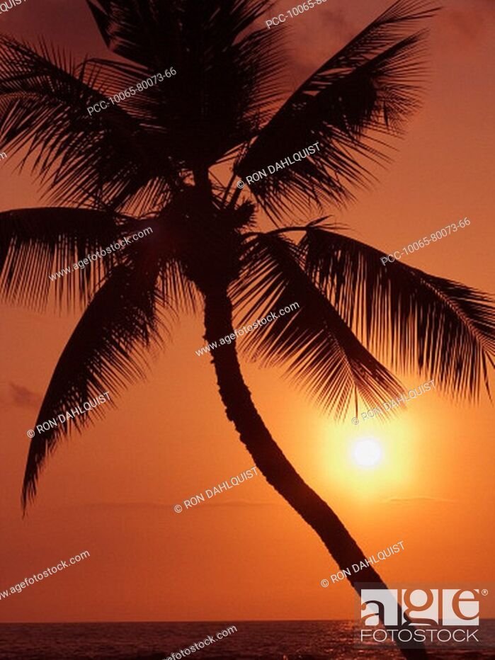 Stock Photo: Hawaii, Palm tree silhouette with orange sky over ocean at sunset.