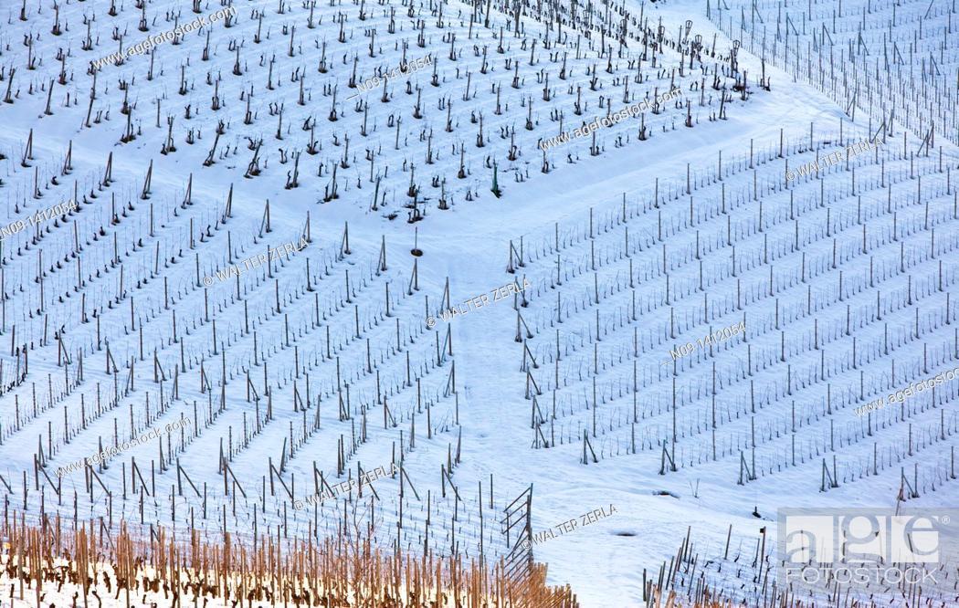 Stock Photo: Barolo wineyards, Langhe, Piedmont, Italy.