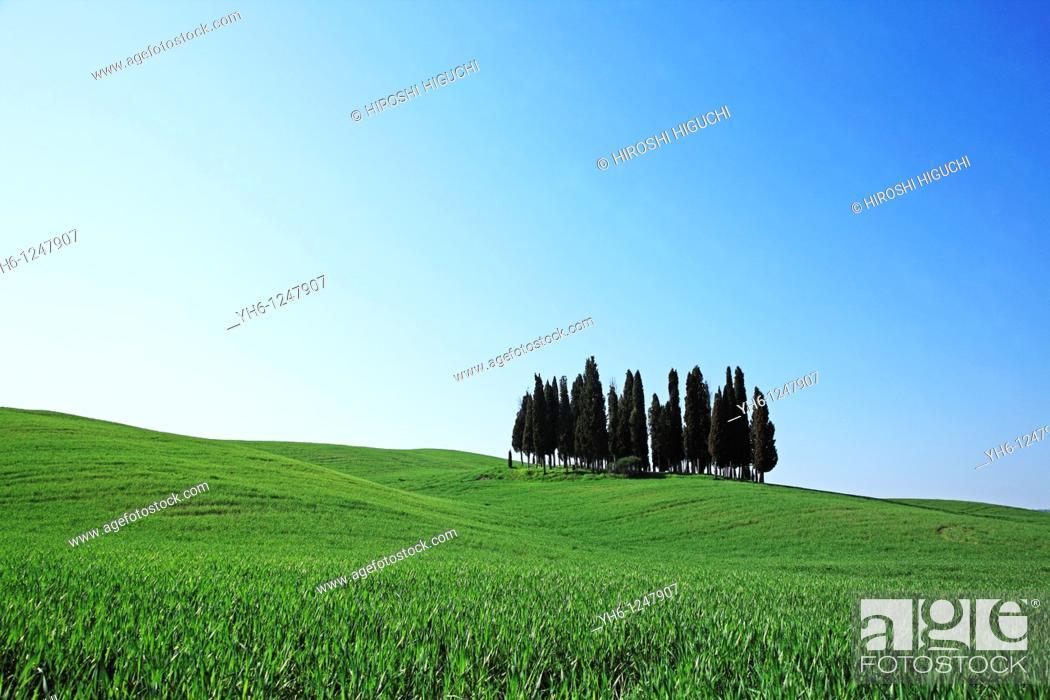 Stock Photo: Italy, Tuscany, Val d'Orcia.