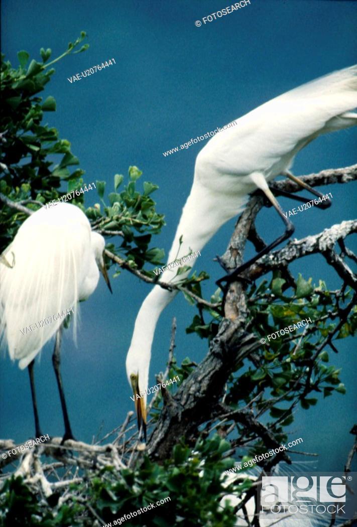 Stock Photo: couple, nature, branch, tree, scene, wild animal, landscape.