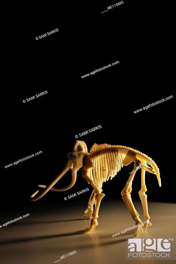 Stock Photo: Mammoth skeleton on black background.