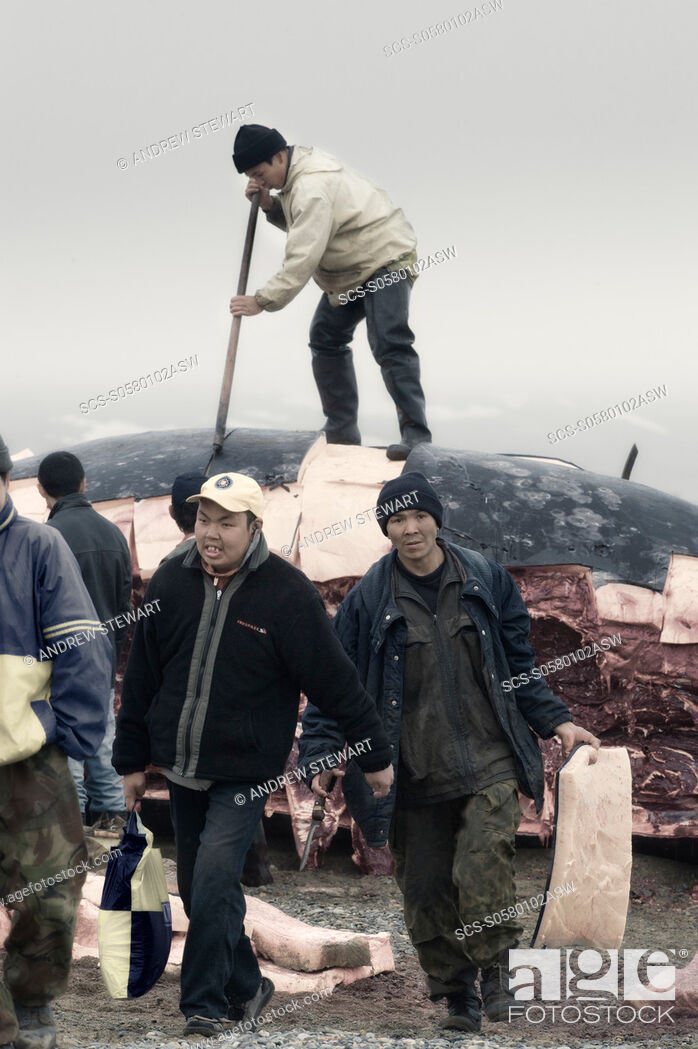 Stock Photo: Inuit Settlement with locals and whale hunters, cutting large slabs of whale meat from a freshly caught Grey whale, Lorino Village Chukotskiy Peninsular Russia.