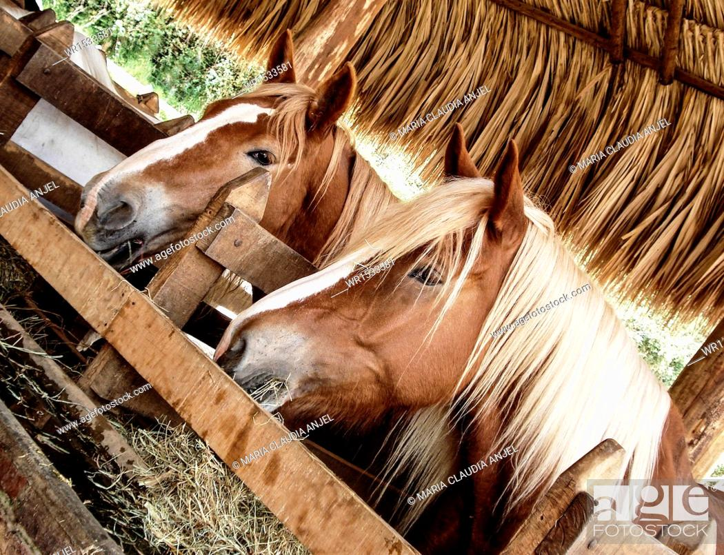 Imagen: Horses in a Stable.