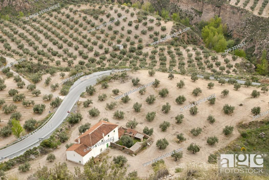 Stock Photo: Agricultural landscape with olive grove, traditional farm and a small fluvial canyon near Gorafe, province of Granada, Andalucia, Spain.