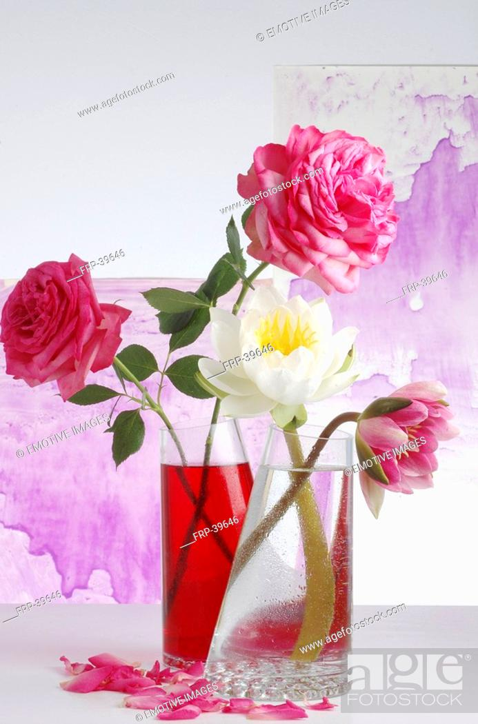 Stock Photo: Water lilies and roses in glass vases.