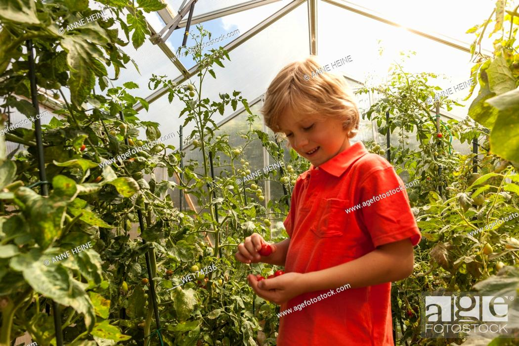 Stock Photo: Boy in greenhouse. Sauerland, Germany.