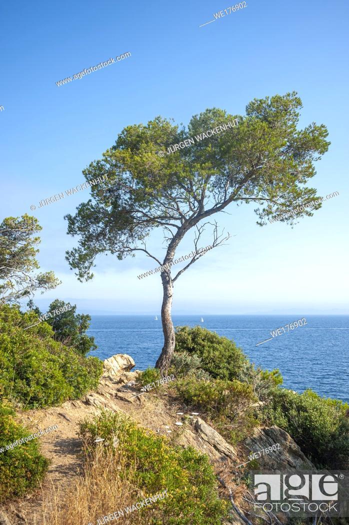 Stock Photo: Landscape on Pointe du Layet, Le Lavandou, Var, Provence-Alpes-Cote d`Azur, France, Europe.