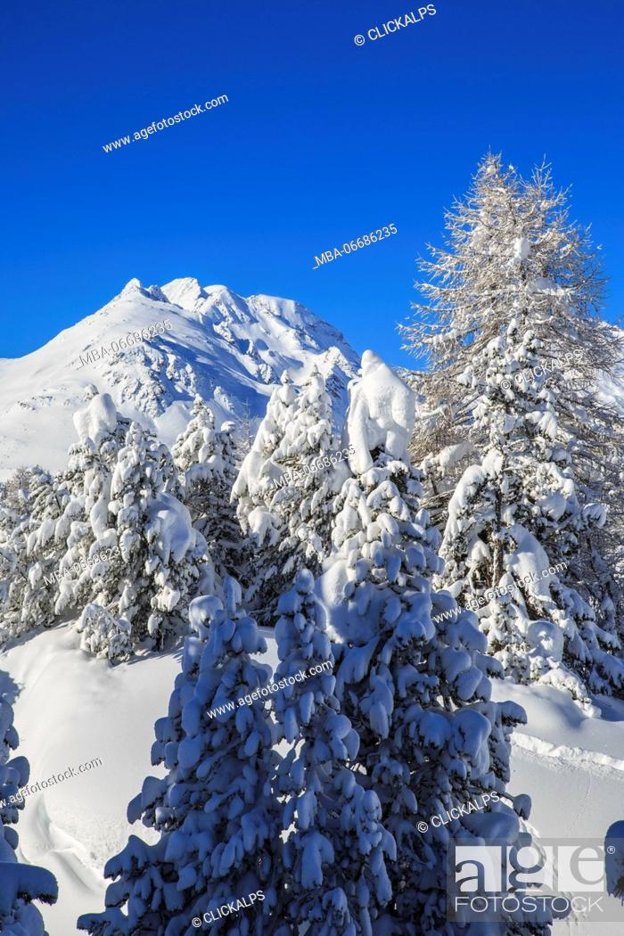 Stock Photo: The heavy snowfall covered trees and the peaks around Maloja Canton of Graubünden Engadine Switzerland Europe.