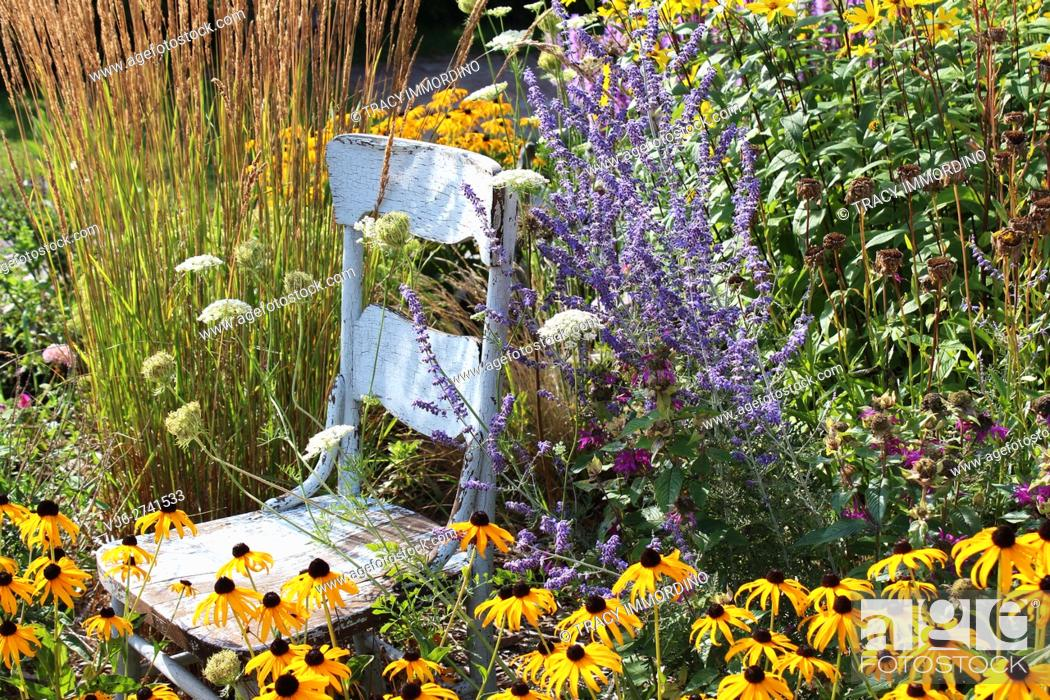 Stock Photo: A rustic, blue, wooden chair in a garden surrounded by tall grasses, Black Eyed Susans, Queen Anne's Lace, Lavender, and Bee Balm.