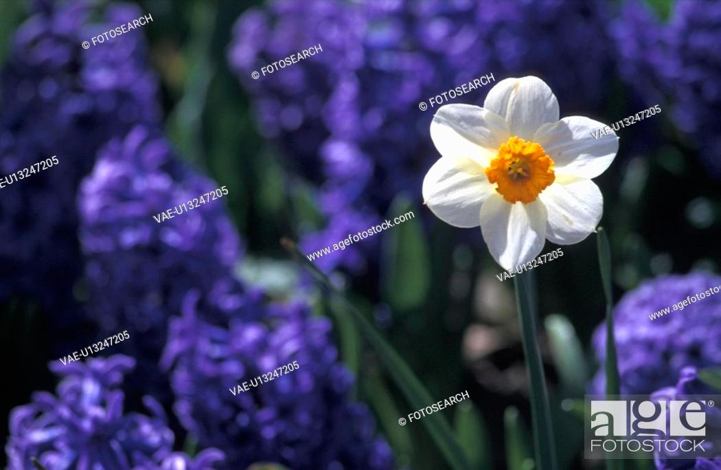 Stock Photo: blue, alexander, blossom, bloom, blauphoton, abloom.