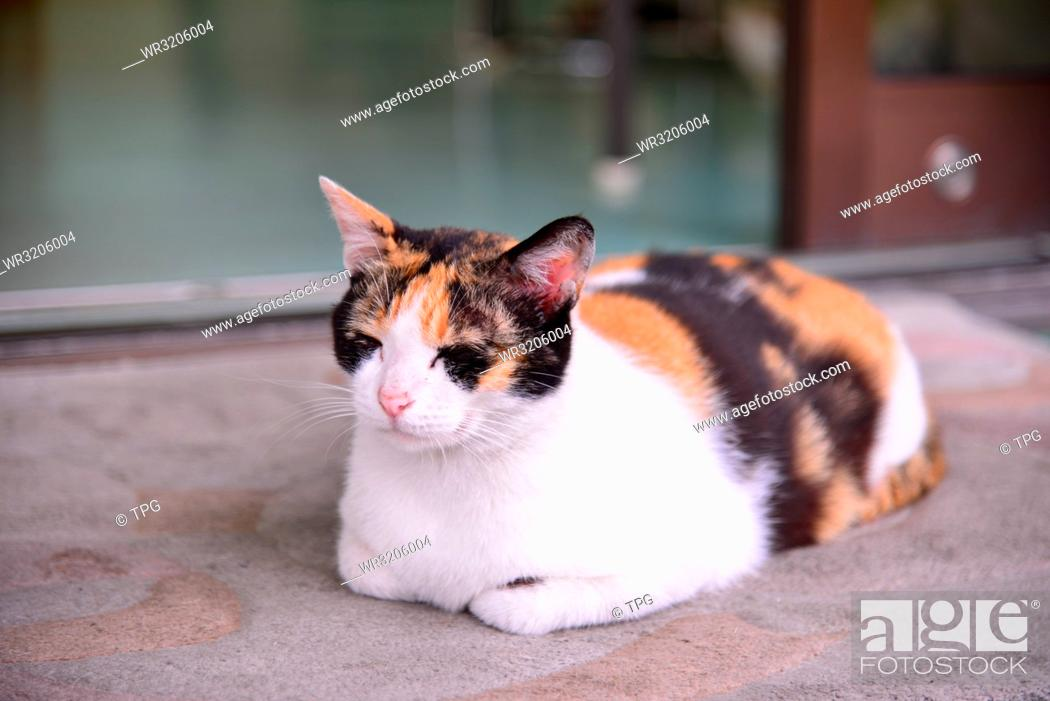 Stock Photo: Cat sits on the carpet in front the door.