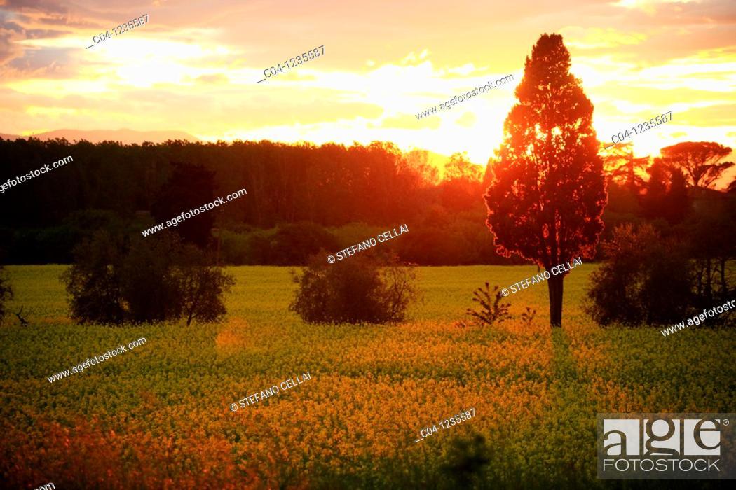 Stock Photo: Country near Florence, Tuscany, Italy.
