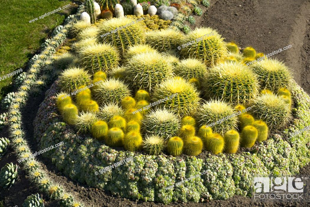 Stock Photo: Cactus garden in public park, Norrkobing, Sweden, under establishment, .