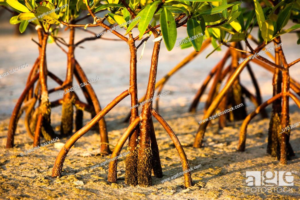 Photo de stock: Isla Blanca, Quintana Roo. México.