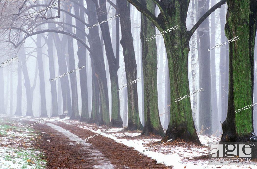 Stock Photo: Small way through trees, Chemnitz, Saxony, Germany.