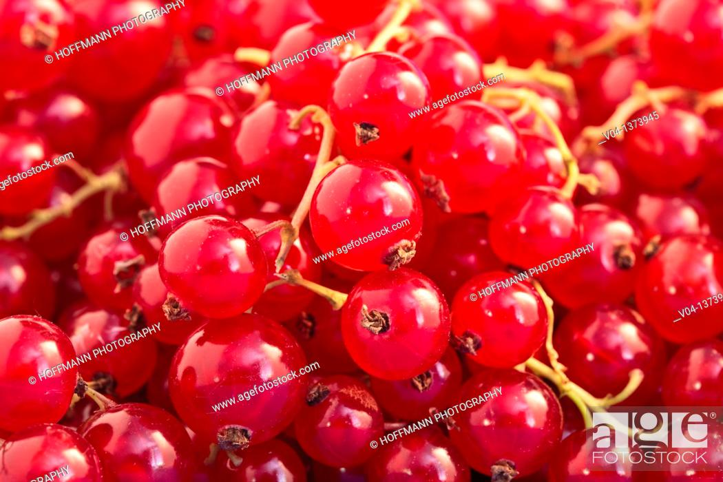 Stock Photo: Close up of redcurrants.