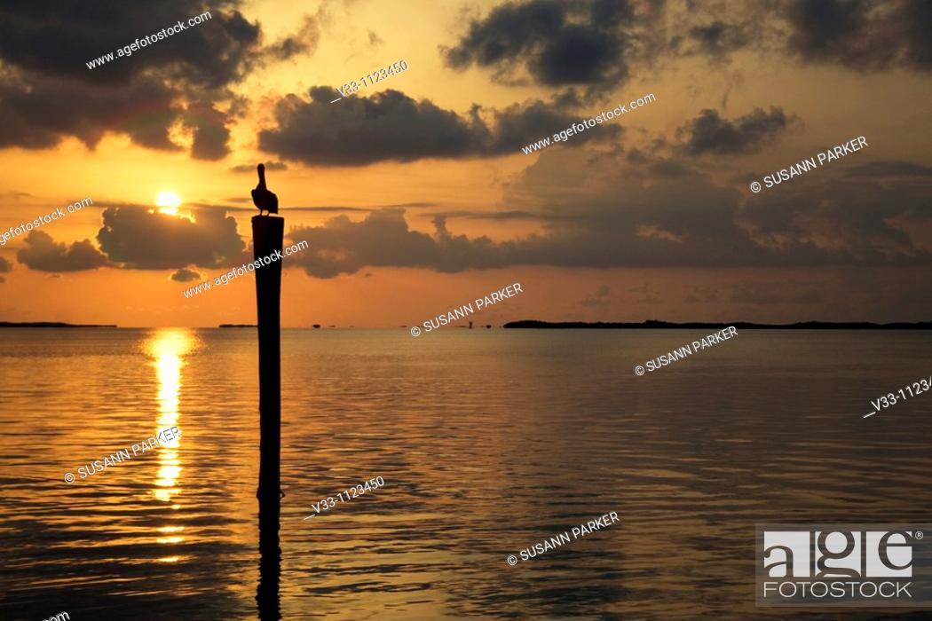 Stock Photo: A brown pelican on a dock at sunset in the Florida Keys.