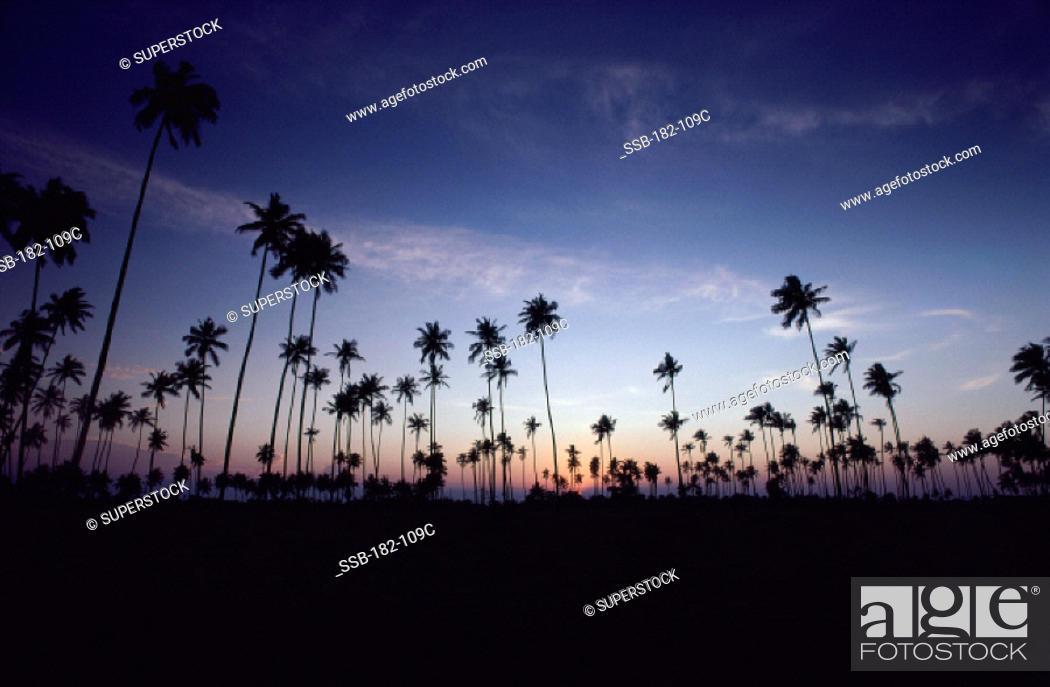 Photo de stock: Passi Kuda Sri Lanka.