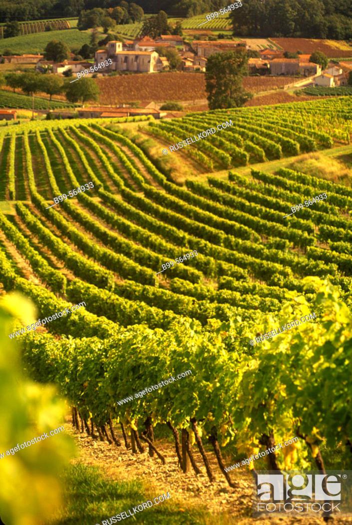 Stock Photo: Scenic Vineyards, Saint Preuil Village, Grande Champagne De Cognac, Charente, France.