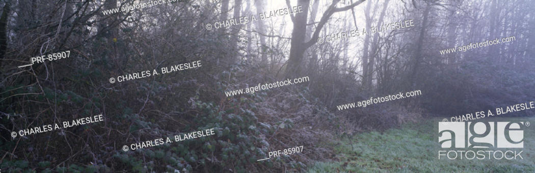 Stock Photo: Fog and Frost in Meadow WA.