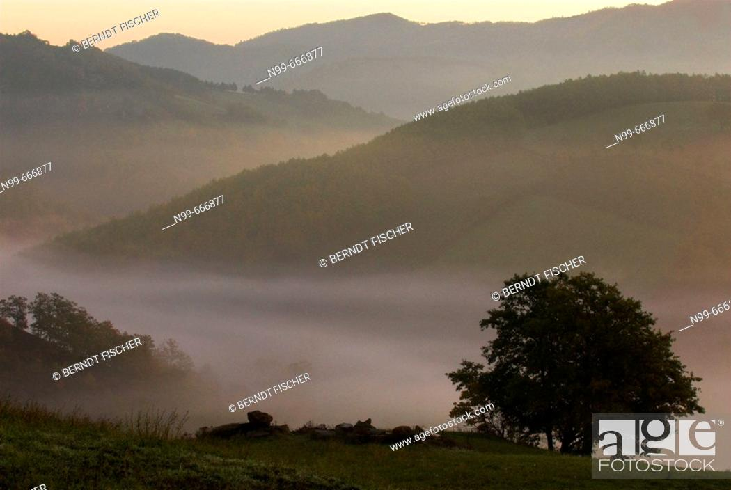 Stock Photo: Beech tree (Fagus sp.) and pasture, deciduous forest, lower mountain ranges, early morning  fog in autumn,  Apennine mountains, Emilia Romagna, Italy.