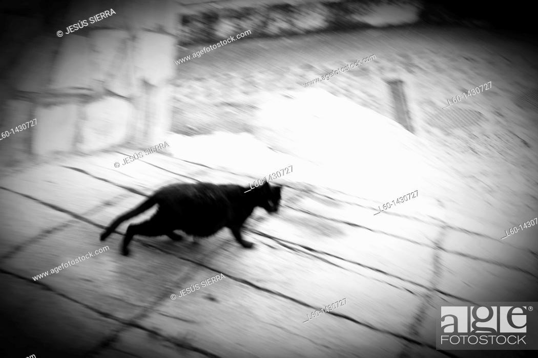 Stock Photo: Cat in Elantxobe.