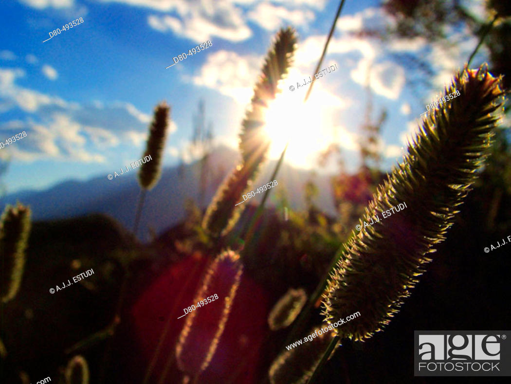 Stock Photo: Mountain grass.