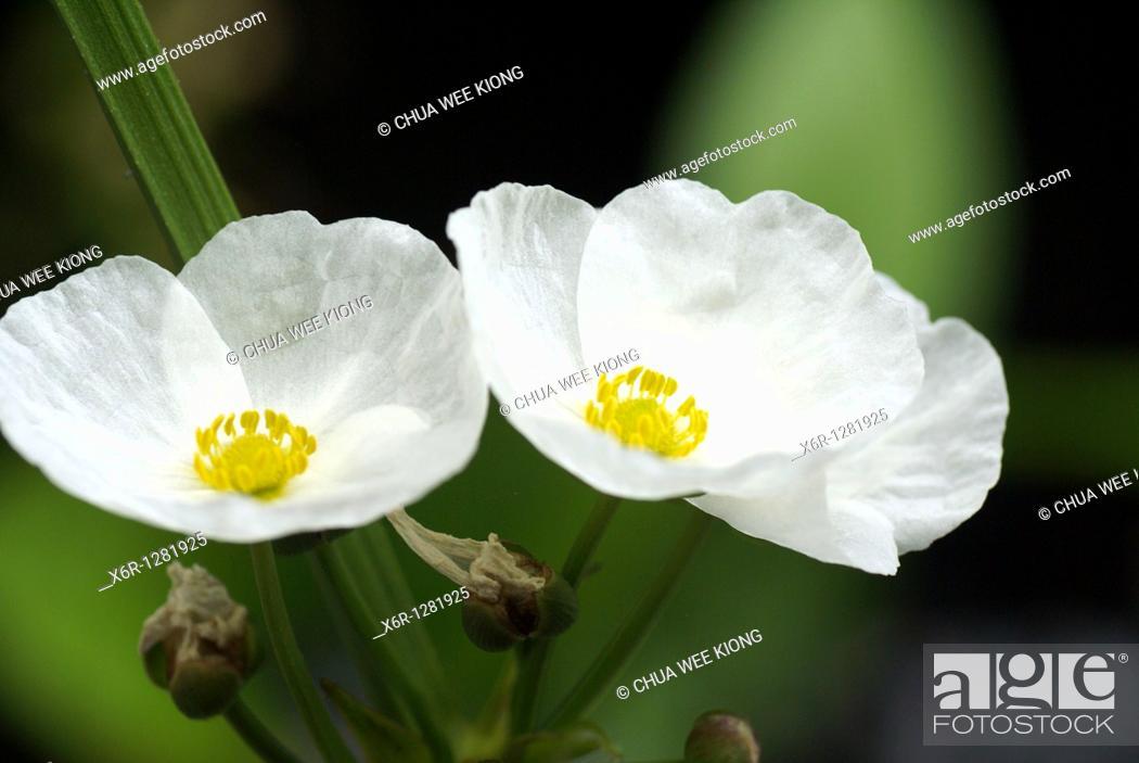 Stock Photo: National Park Kuching. Malaysia.