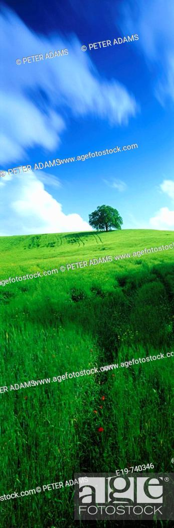 Stock Photo: Single tree.