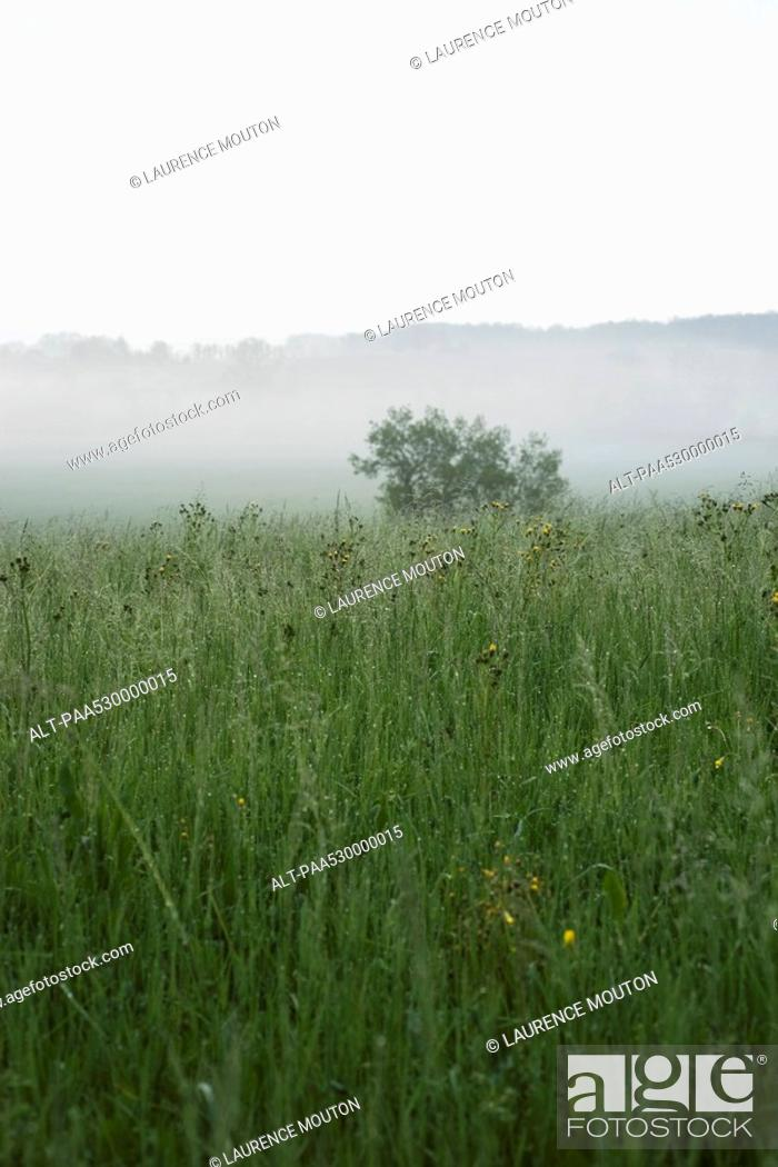 Stock Photo: Foggy rural landscape.