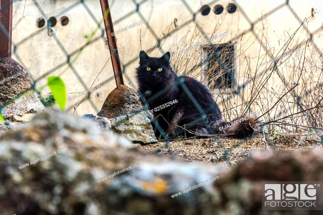 Stock Photo: Domestic cat, Caldes d'Estrac, Barcelona province, Spain.