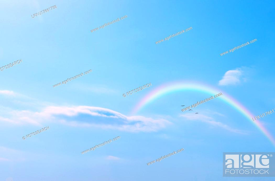 Stock Photo: Bird flying in the sky and rainbow, Tokyo Prefecture, Honshu, Japan.