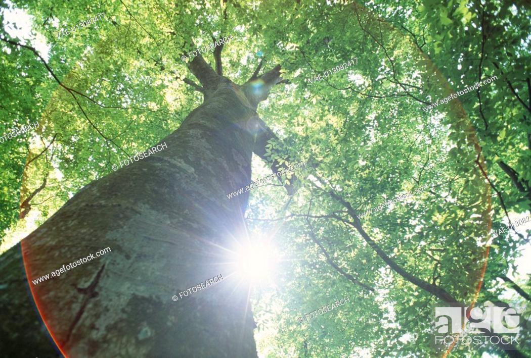 Stock Photo: A Big Tree And The Sun.