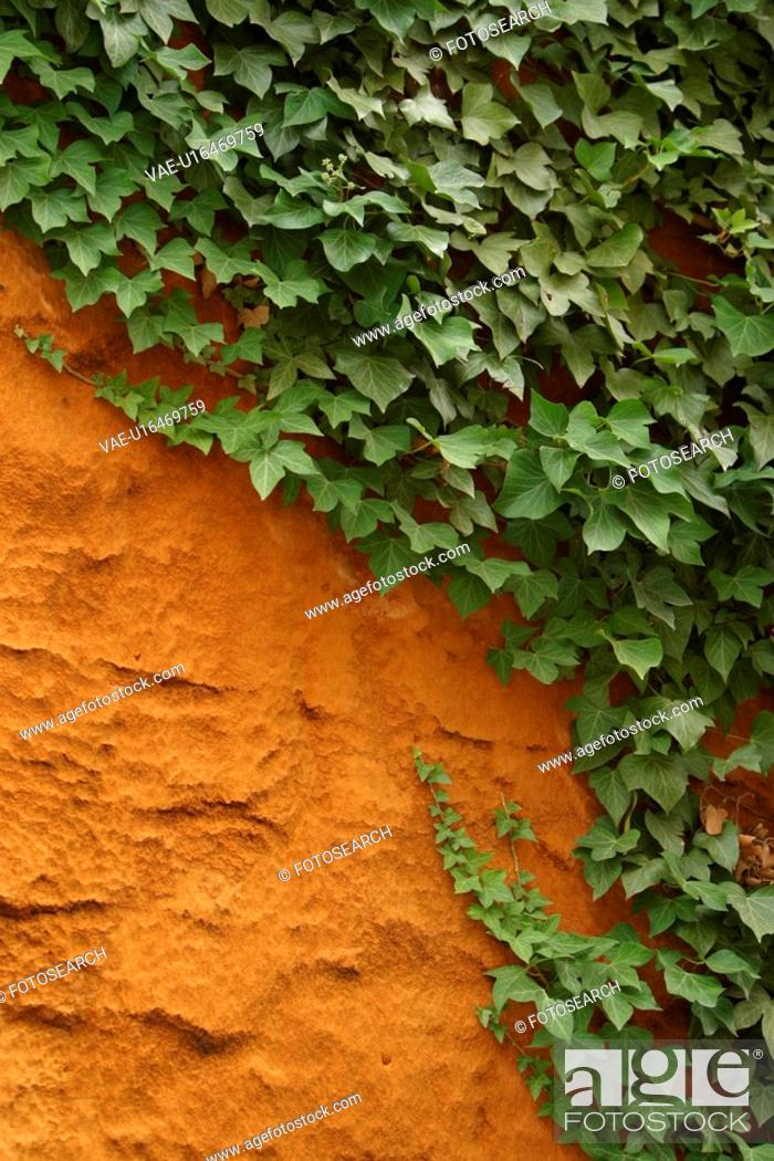 Stock Photo: vegetation, creeper, leafage, wall, cement, plaster.