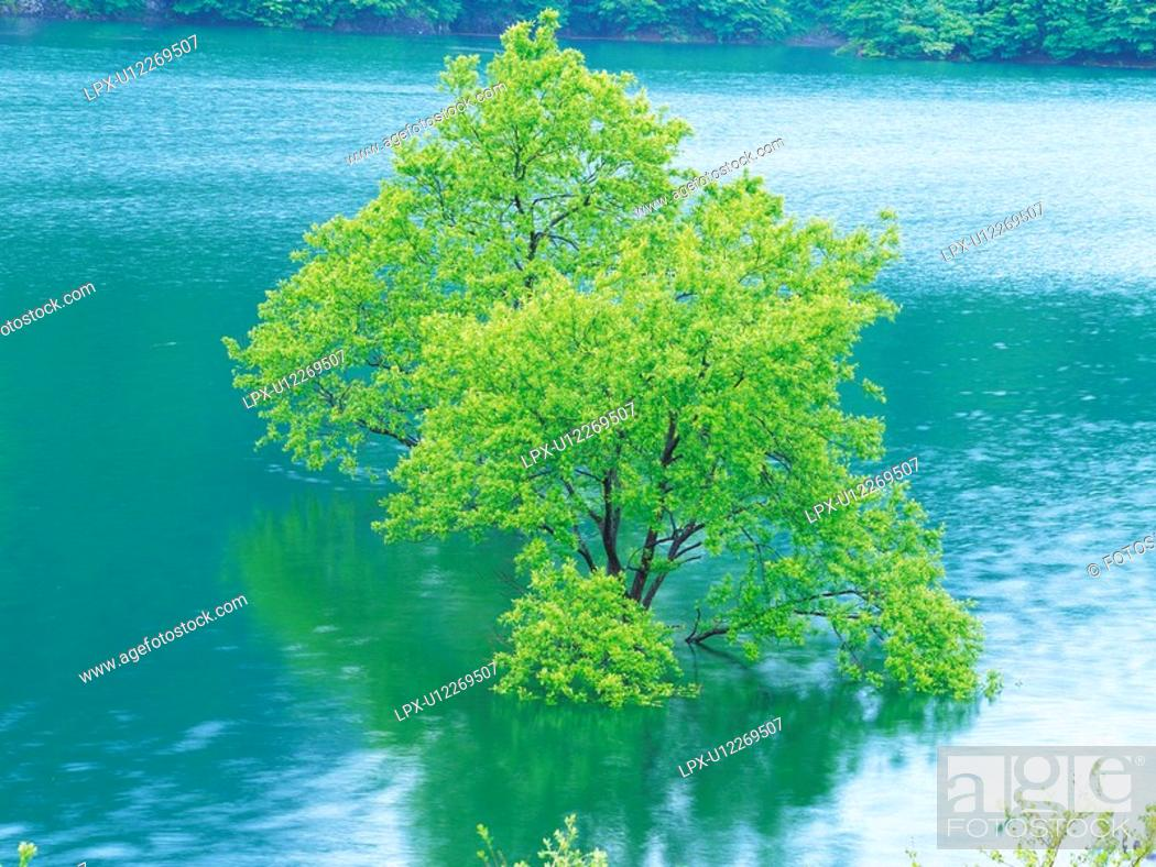 Stock Photo: Tree in Water, High Angle View, Pan Focus.