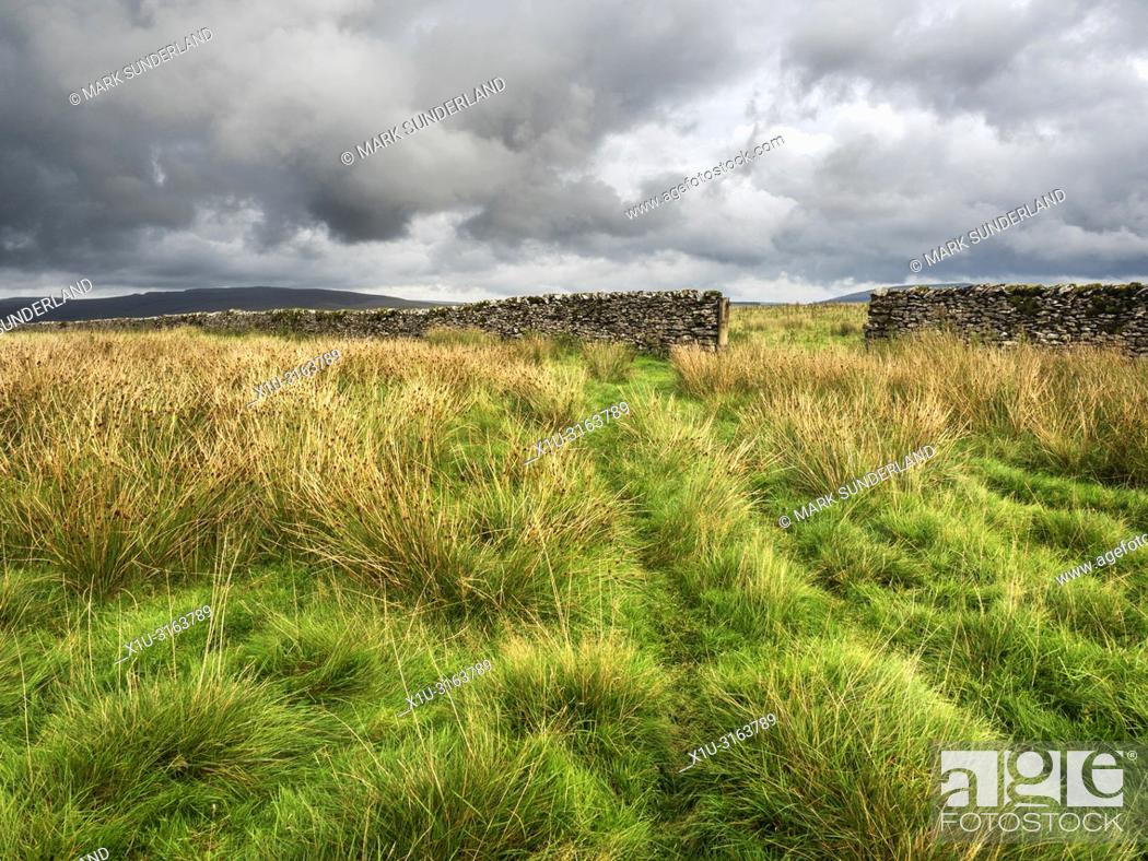 Stock Photo: Gate in a dry stone wall in grassland at Gauber High Pasture near Ribblehead Yorkshire Dales England.