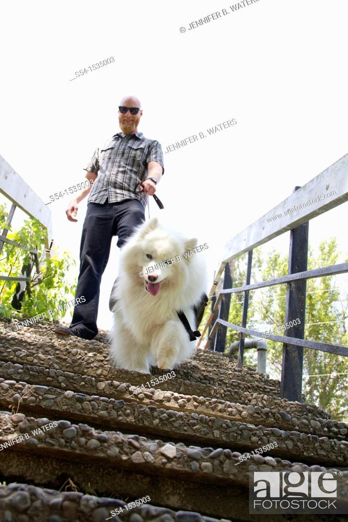 Stock Photo: A man, 30-35 years, with his Samoyed dog in Spokane, Washington, USA.
